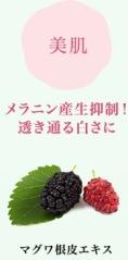 マグワ.jpg